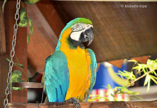 Macaw or Parrot