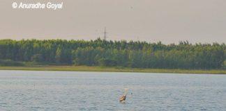 Fox Sagar Lake landscape