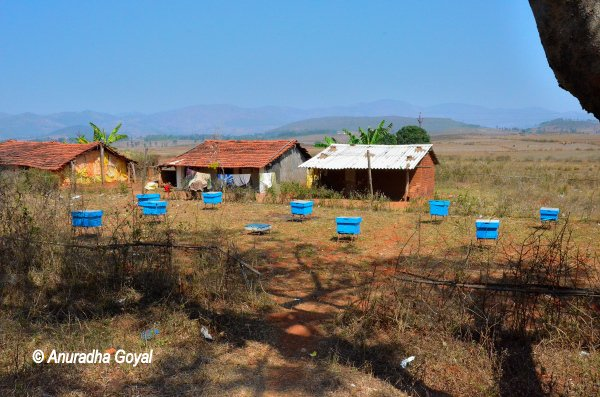 Honey-Making Blue boxes all over at Araku Valley