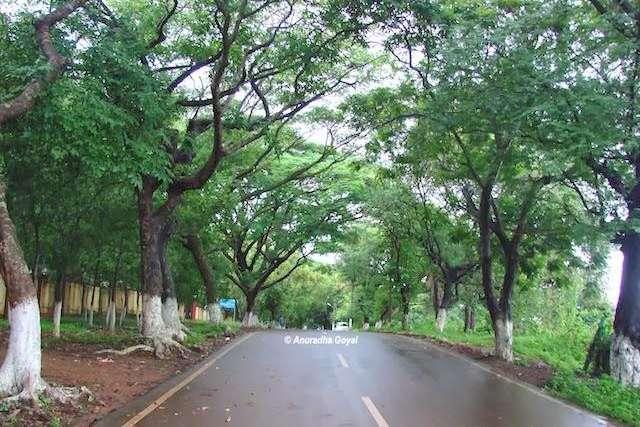 The green canopy on Raj Bhavan road