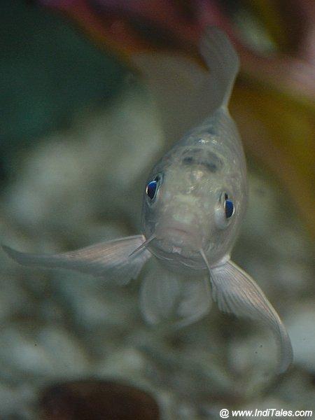Look at this fish eyes