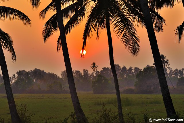 Sunset Scene through the Coconut Treelines and lush greenery of the village