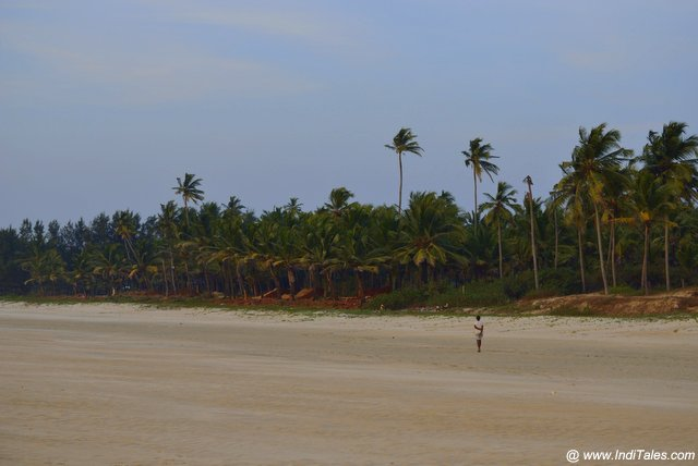 Utorda Beach, Goa landscape view with Coconut trees