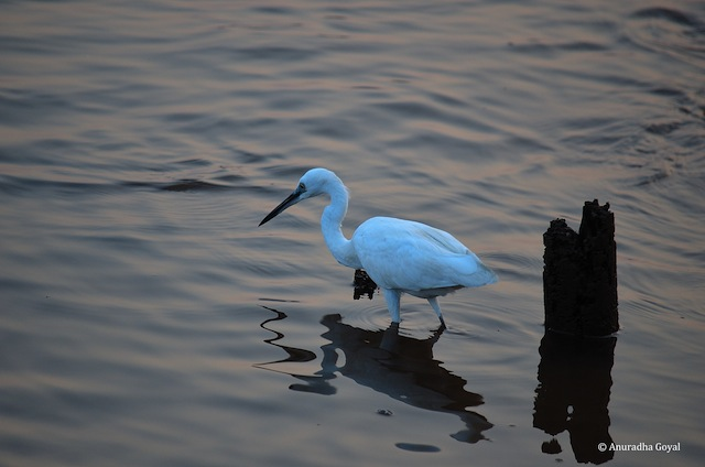 Egret by the shore of the river