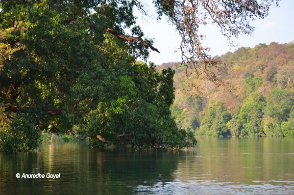 Serene moments by the Kali river at Dandeli Forests