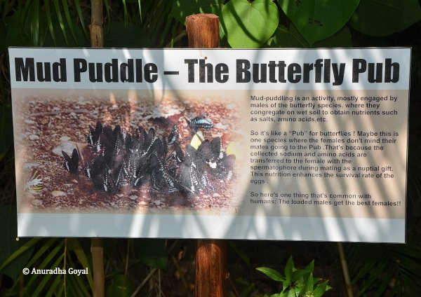 Mud Puddle at Butterfly conservatory