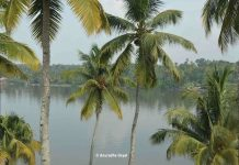Typical Kerala landscape of Coconut tree-lined backwaters