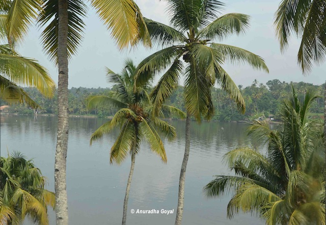 Landscape of coconut tree-lined backwaters - South Kerala tour first impressions