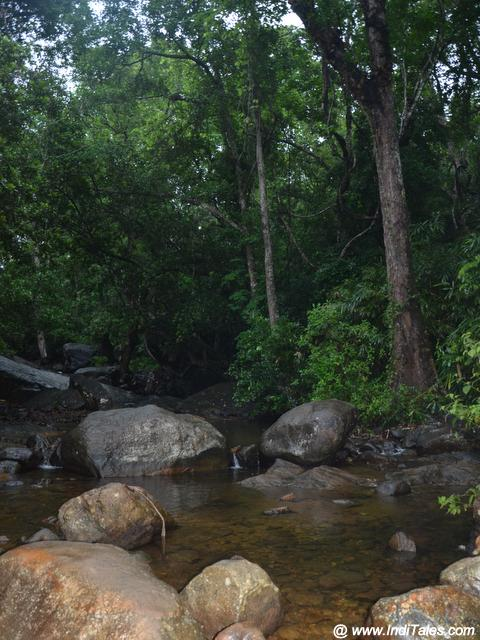 Jungles en route to Ponmudi Hill Station
