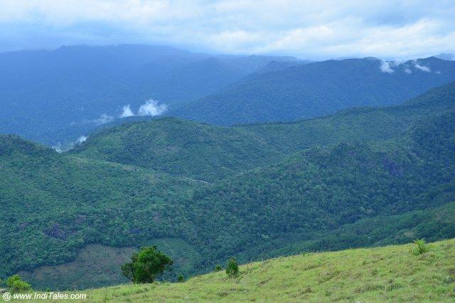 Lush green landscape view