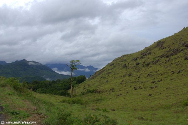 The hills of the western ghats