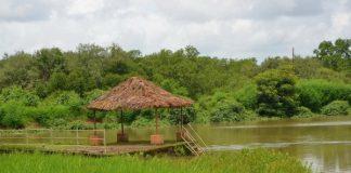 Landscape by the Devaaya Ayurveda Nature Cure Centre
