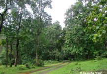 The path leading to dense jungles