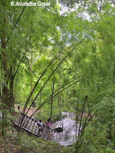 Wooden Walkway leading to Thai-Burma Rail near Hellfire Pass Memorial