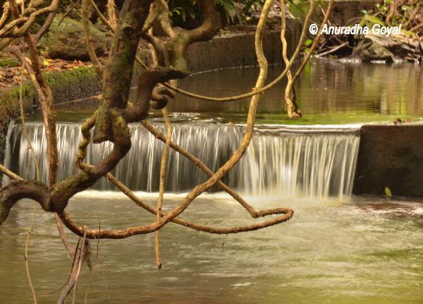 Water stream at Bondla Wildlife Sanctuary, Goa
