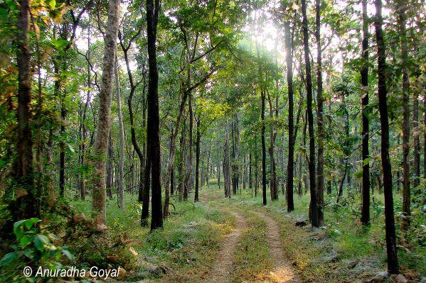 Dense jungles of Satpura National Park
