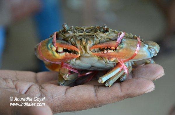 A tied crab