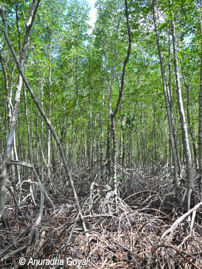 Mangrove Roots at Pranburi Forest Park