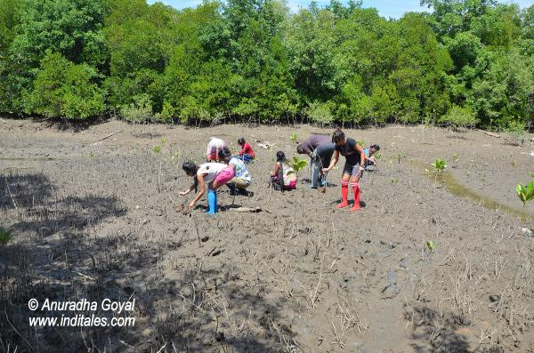 Planting the Mangroves