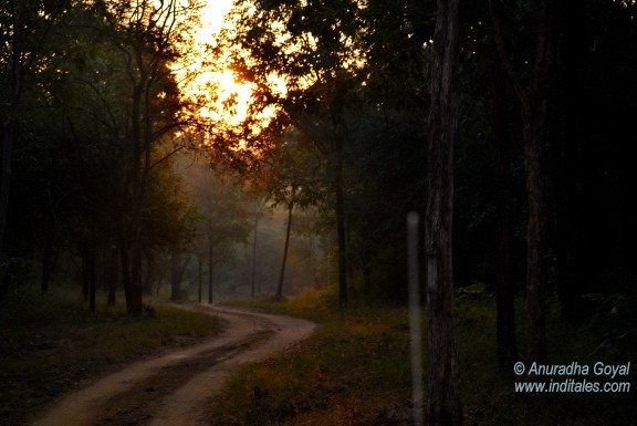 Sunrise lights up the path of Satpura National Park