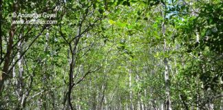 Walkway at Pranburi Forest Park
