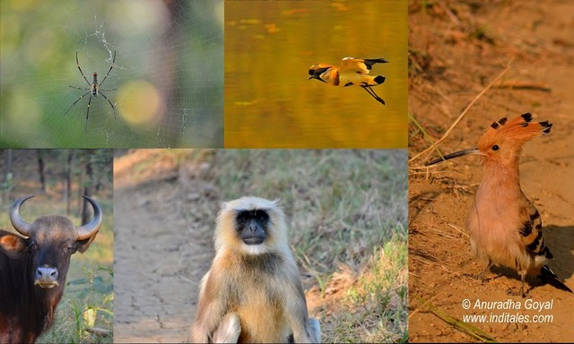 Wildlife we met at Satpura National Park