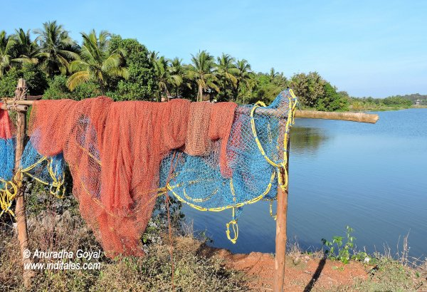 Fishing Net at Moira Backwaters