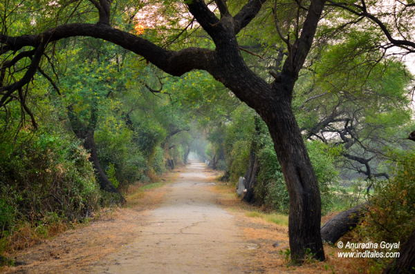 Pathways at Bharatpur Bird Sanctuary