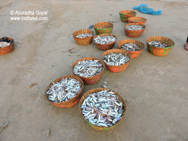 Baskets of Fish and Crabs at South Goa beaches