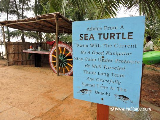Travel Advise by Sea Turtle at Sai Vishram Beach Resort