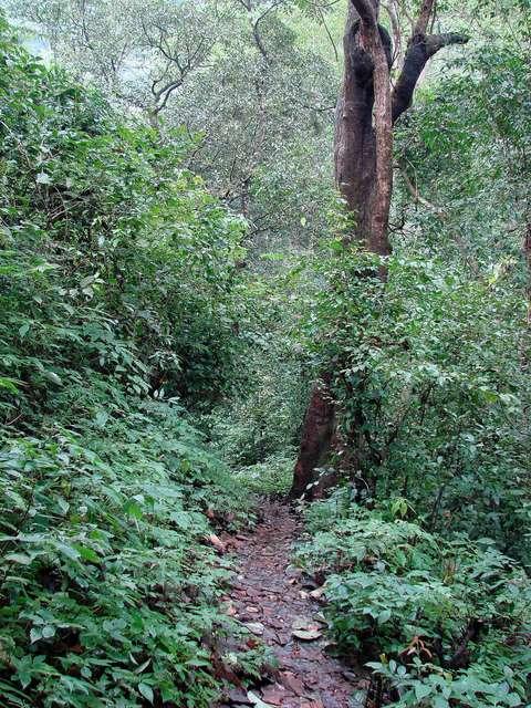 The narrow pathway heading to the Kuskem Waterfalls
