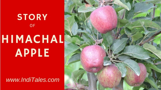 Story of Himachal Apple