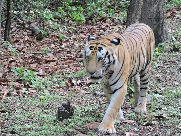 Tiger Munna moves on