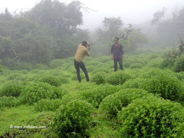 Photography amidst the clouds on the Ghats