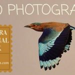 Indian Roller Bird Photography