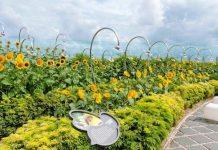 Sunflower Garden at Changi Airport Terminal 2