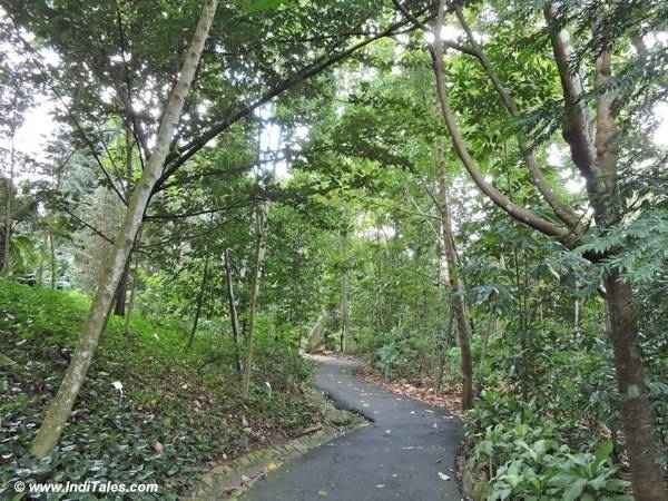 Rainforest route at Singapore Botanic Gardens