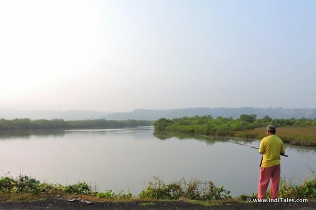 Fishing by Mandovi backwaters at Divar Island