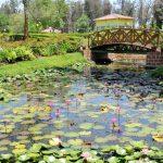 Lotus Pond at Nakshatra Garden, silvassa