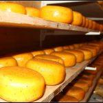 Wheels of Gouda Cheese