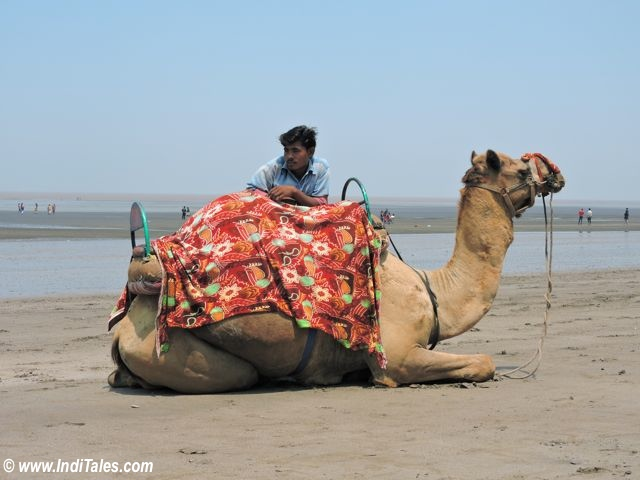 Camel ride at Jampore Beach, Daman