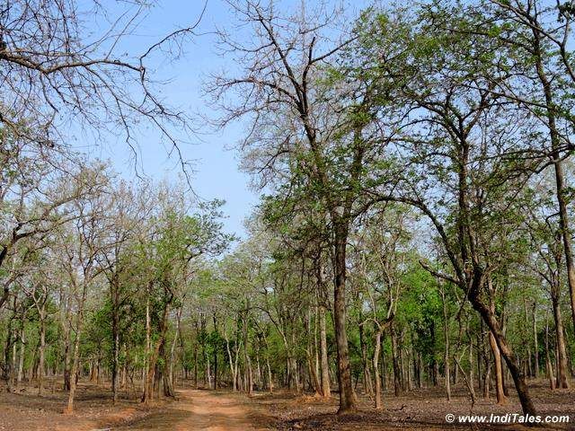 Forest of Pench National Park, Seoni