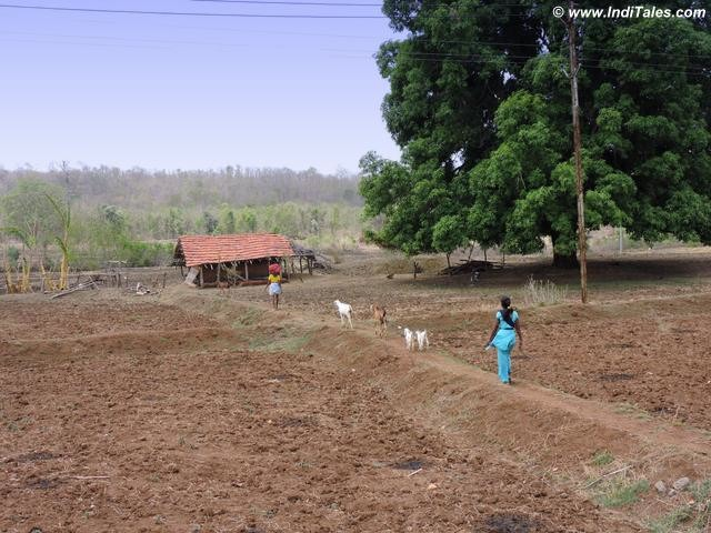 A quintessential Indian village around Pench National Park, MP