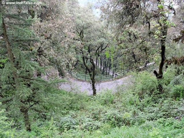 Walking trail at Landour