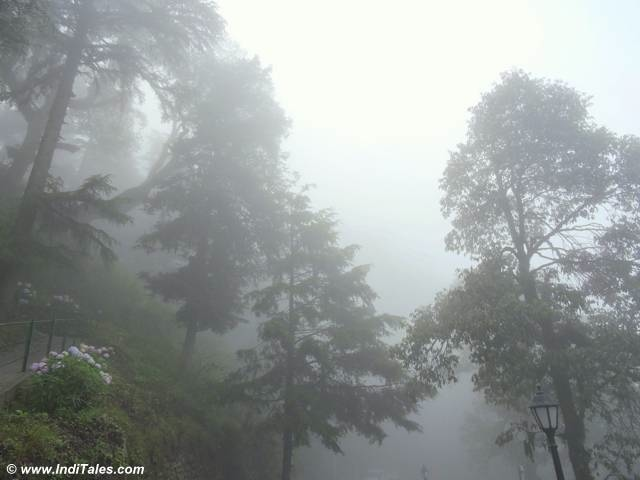 Clouds & Trees at Landour