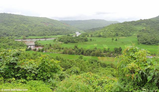 Lush green landscape of Konkan en route to Marleshwar