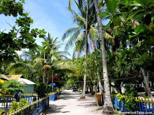 Tree-lined streets of Arborek Tourist Village in Raja Ampat