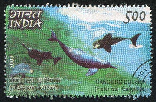River Dolphin - the national Aquatic animal of India