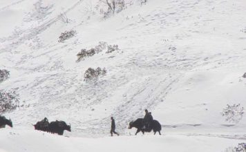 Locals and Yak on snow clad mountains en route to Nathu La Pass