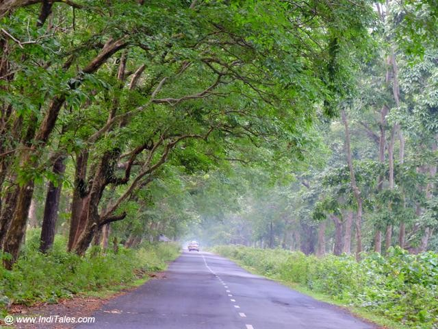On road at Chilapata forest range, Dooars